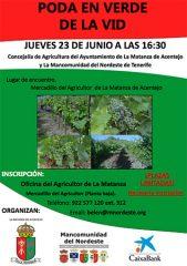 Jornada de poda en verde de la vid en La Matanza de Acentejo